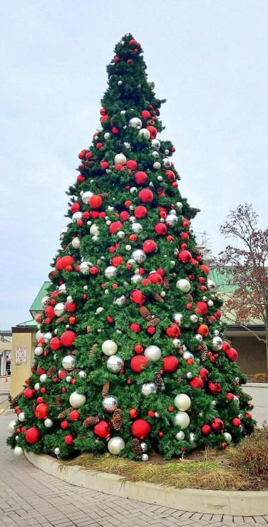 Christmas Tree Old Orchard Mall Nov 19 2018
